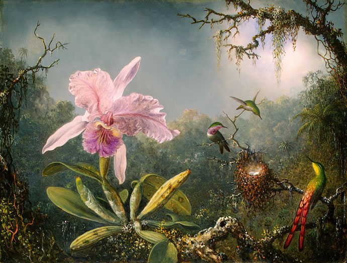 Orchid and Hummingbirds, by Martin Johnson Heade (1819 - 1904)