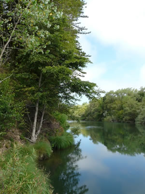Local hotspots birding in sonoma county