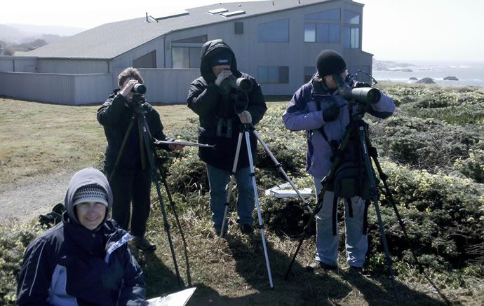 Christmas Bird Count, Sea Ranch, CA , Abalone Bay, Vacation Rental