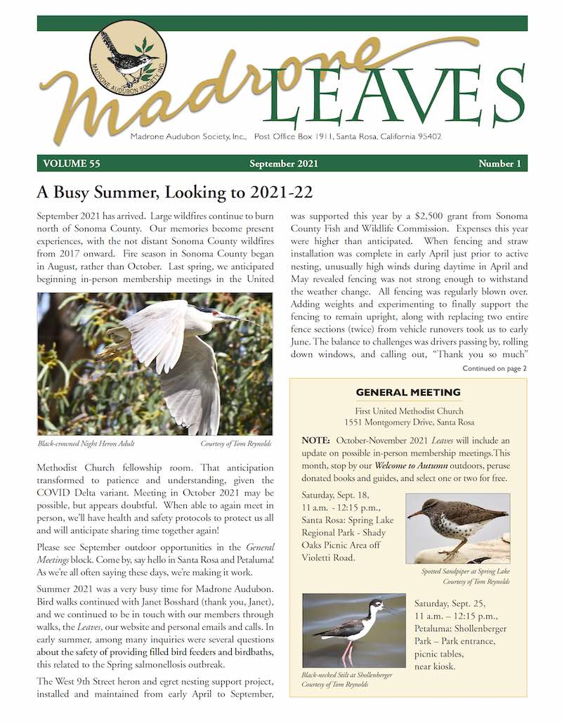 Madrone Leaves Newsletter